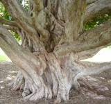 Free Photo - Massive tree roots