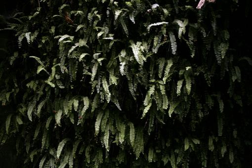 Wall of ferns - Free Stock Photo