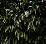 Free Photo - Wall of ferns