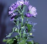 Free Photo - Purple flower