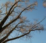 Free Photo - Tree branches