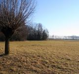 Free Photo - Landscape with a single tree in the fore