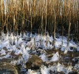 Free Photo - Frozen grass