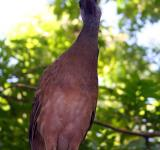 Free Photo - Brown bird
