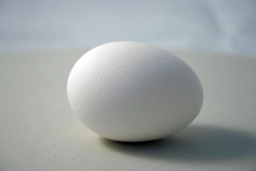 Egg - Free Stock Photo