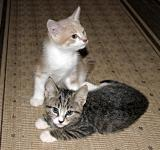 Free Photo - Two kittens