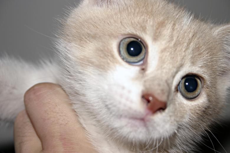 Free Stock Photo of Kitten closeup Created by Bjorgvin