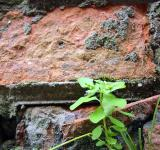 Free Photo - Green plant infront of brick wall