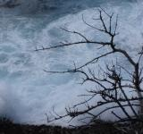 Free Photo - Braking waves behind a tree