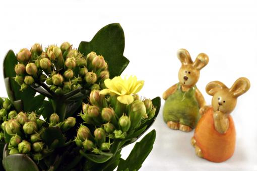 Easter rabbits looking at a flower - Free Stock Photo