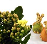 Free Photo - Easter rabbits looking at a flower