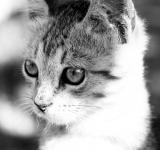 Free Photo - Cat closeup