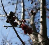 Free Photo - Tree branches and berries