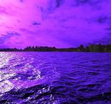Free Photo - IN PURPLE MOOD