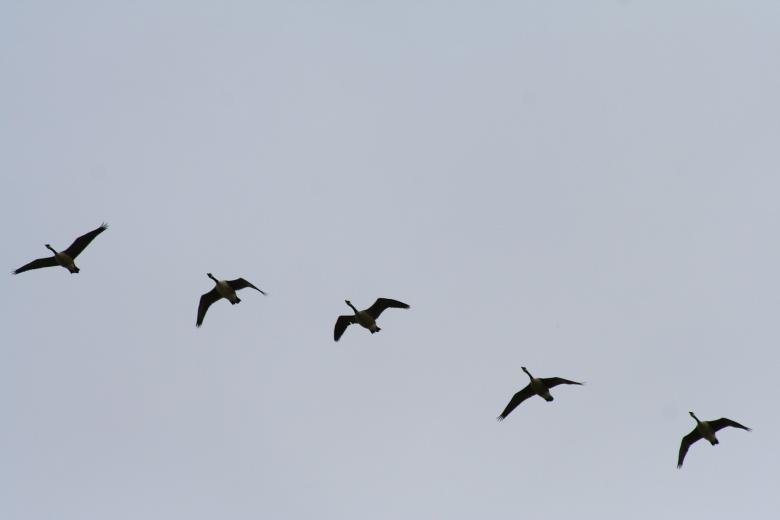 Free Stock Photo of Five birds Created by trevor henry