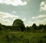 Free Photo - Green landscape