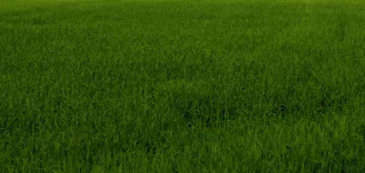 Green grass texture - Free Stock Photo