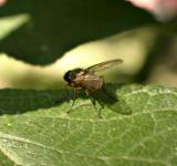Free Photo - Fly on a leaf