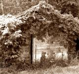 Free Photo - Plant covered shack