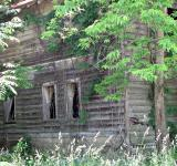 Free Photo - Abandoned wooden shack