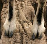 Free Photo - Hooves