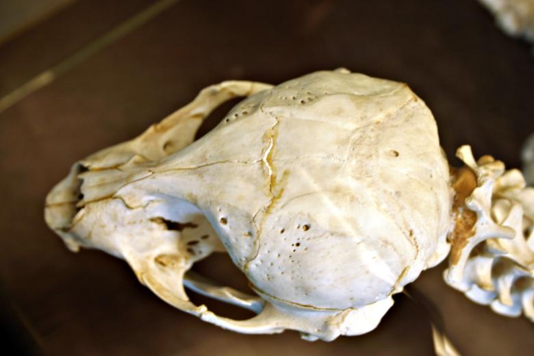 Free Stock Photo of Animal skull Created by Bjorgvin