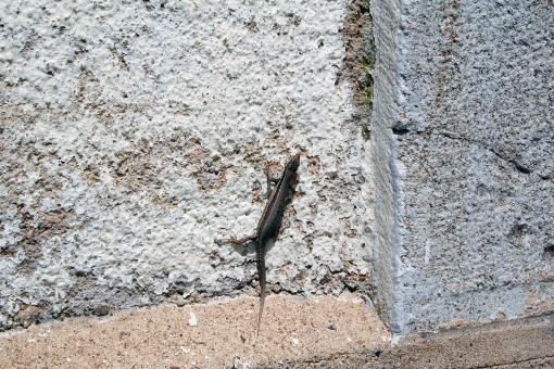 Small lizard - Free Stock Photo