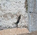 Free Photo - Small lizard