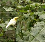 Free Photo - White and yellow bird