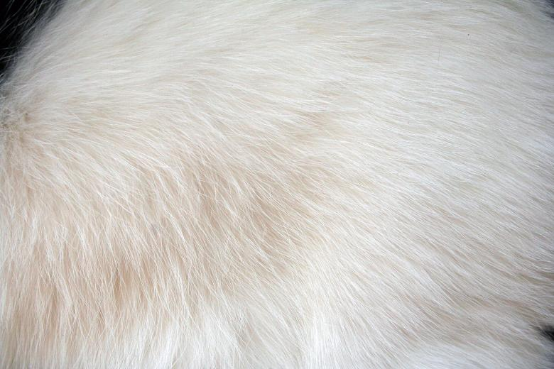 Free Stock Photo of White fur Created by damien van holten