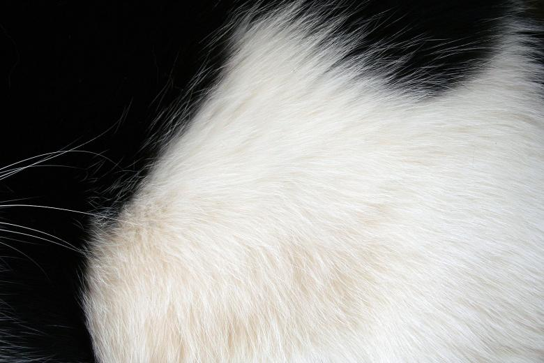 Free Stock Photo of Black and white fur Created by damien van holten