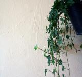 Free Photo - Plant against a wall
