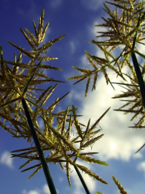Free Stock Photo of Plants agains the sky Created by jayne shives