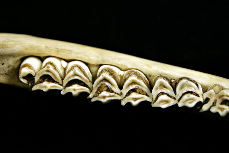 Free Stock Photo of Teeths Created by Bjorgvin