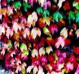 Free Photo - Multy Coloured Foliage