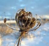Free Photo - Winter weeds