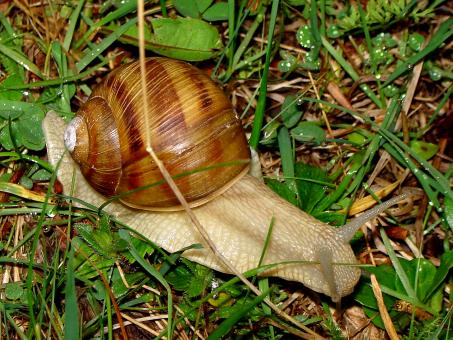 Snail - Free Stock Photo