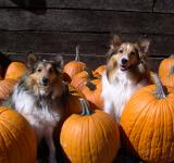 Free Photo - Pumpkin patch kids