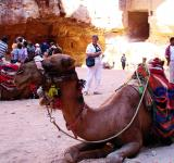 Free Photo - Petra Camel