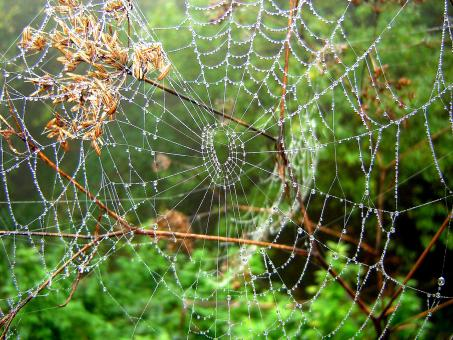 Spiderweb - Free Stock Photo