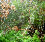 Free Photo - Spiderweb