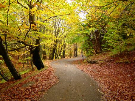 Autumn walk - Free Stock Photo