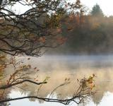 Free Photo - Misty Morning Lake