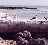 Free Photo - SeaGulls