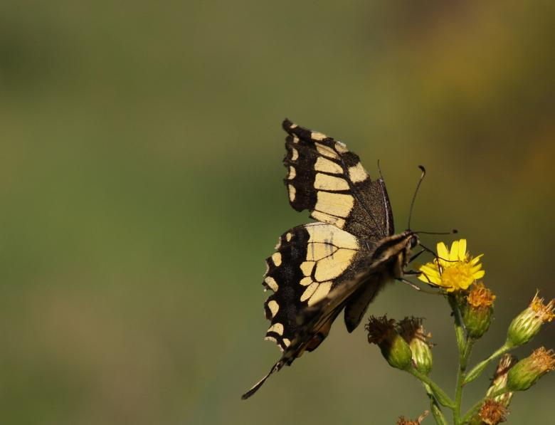 Free Stock Photo of Butterfly Created by chavdar gechev