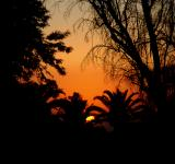 Free Photo - Sunset Through Palms
