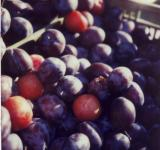 Free Photo - Plums