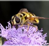 Free Photo - Close Wasp