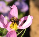 Free Photo - Busy Bee