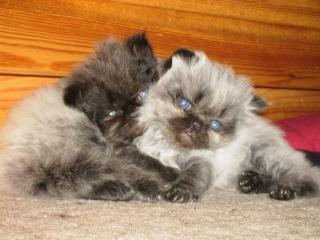 Download Kittens Free Photo